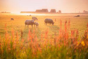 Sommermorgennebel im niederländischen Polder