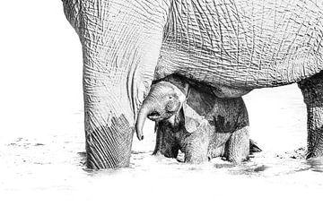 Olifantenbaby met moeder van Robert Styppa