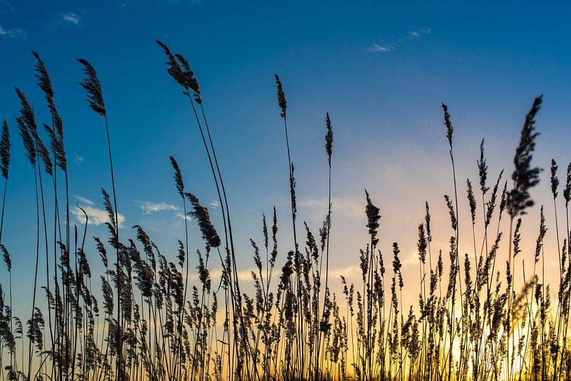 Zonsondergang met rietpluimen van Hennnie Keeris