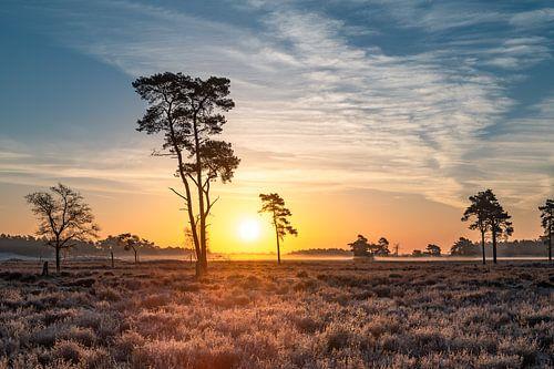 Sonnenaufgang Drunense Dünen