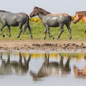 Paarden| Konikpaarden in spiegeling - Oostvaardersplassen  van Servan Ott