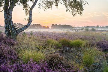 Birke auf der Heide von Joep de Groot