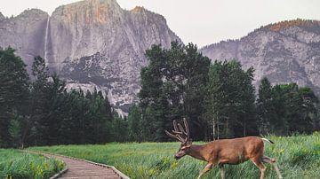 Hert Yosemite nationaal park van Michelle van den Hondel