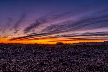 Sonnenuntergangs-Phönix von leon brouwer