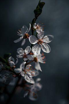 Mysteriöse Blüte von Sem Viersen