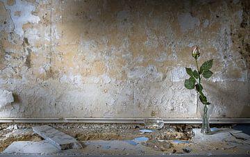 Eternal life von Olivier Van Cauwelaert