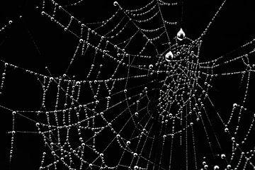 Tautropfen im Netz
