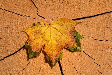 Ahornblad in de herfst van Ulrike Leone