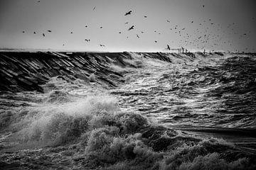 Storm von Steffi Reimers