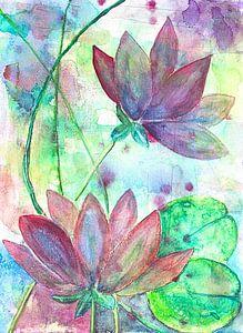 Water Lilies van