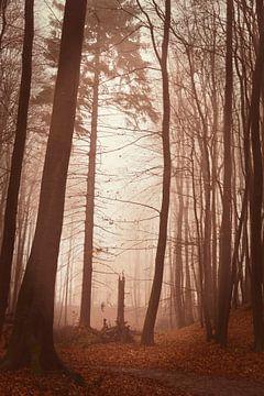 In het donkere bos van Claudia Evans