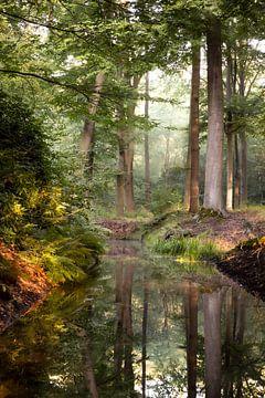 Märchenwald von Rob Willemsen