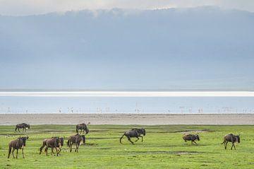 Ngorongoro van