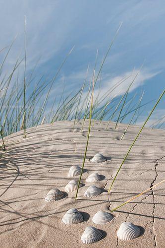 Nordsee Muschelfund