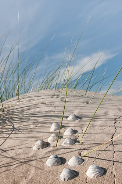 Noordzee Shells van Reiner Würz / RWFotoArt