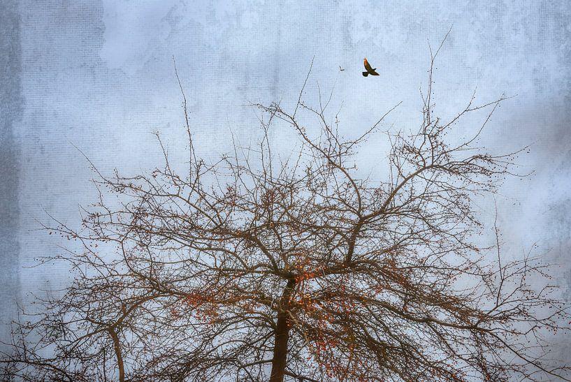 De vogelboom van Arja Schrijver Fotografie