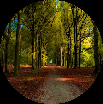 Schilderachtig bospad van Jan Diepeveen