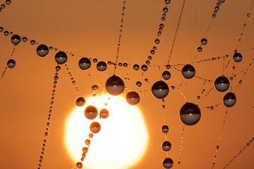 druppels bij zonsopkomst - parels in de polder van jordan blaauw