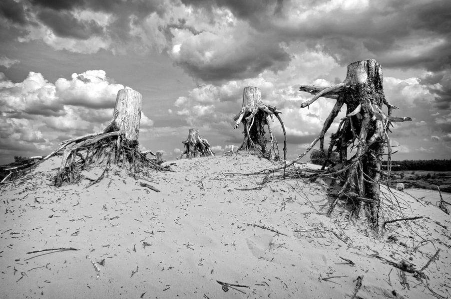 Dode stronken op zandduin van Fotografie Arthur van Leeuwen