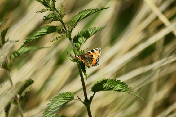 Vlinder van angela de baat