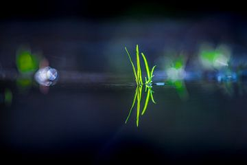 Grassprieten in een stil staande plas gespiegeld van Harrie Muis