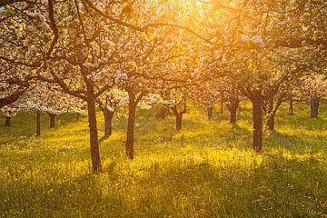 Rêve de fleurs au coucher du soleil sur Jiri Viehmann