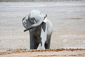 NAMIBIA ... Elephant fun I