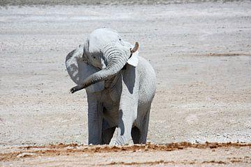 NAMIBIA ... Elephant fun I von Meleah Fotografie