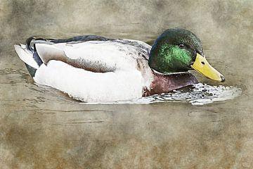 Un canard mâle nage dans l'eau (oeuvre d'art) sur Art by Jeronimo