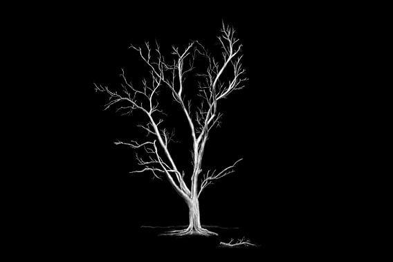 Grote oude bladloze boom. van Jan Brons