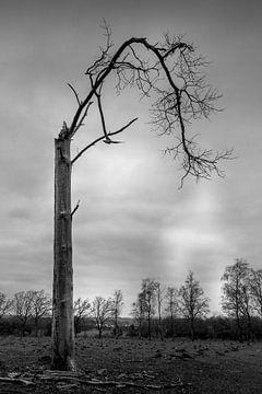 Wie ein Schwarz-Weiß-Foto der Natur Farbe in Ihr Interieur bringen kann von Jacques Jullens