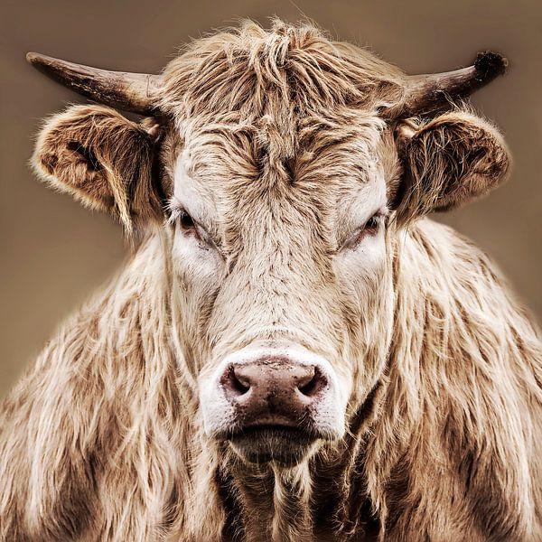 Close-up boze koe van Diana van Geel