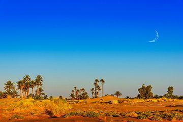 Oase in de Sahara, Marokko van Rietje Bulthuis