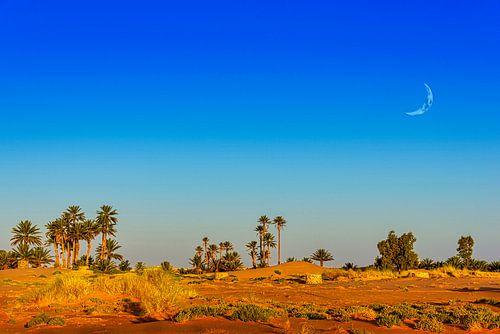Oase in de Sahara, Marokko