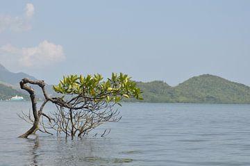 Mangrove von Koen Venneman
