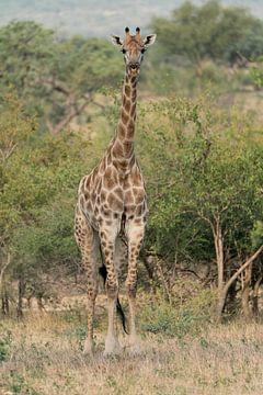 Giraffe von Ingrid Sanders