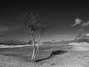 Eenzame boom van Marcel van Berkel