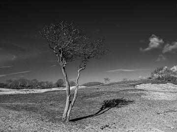 Einsamer Baum von Marcel van Berkel