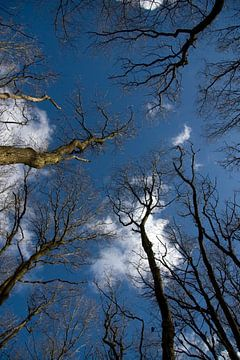 Bomen in de Lucht von Ronald Jansen