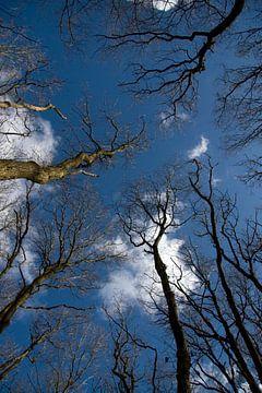 Bomen in de Lucht sur Ronald Jansen