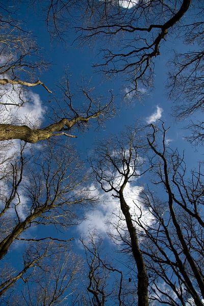 Bomen in de Lucht van Ronald Jansen