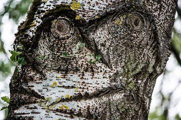 Baum mit Gesicht von marco de Jonge