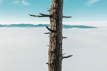 Baum mit abgetrennten Ästen vor Morgennebel von Besa Art