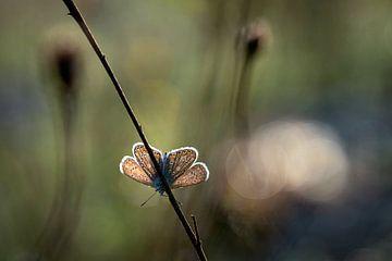 Blauer Schmetterling auf einem Zweig in der Sonne von Karin de Jonge