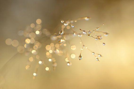 Gras met dauwdruppels in goud