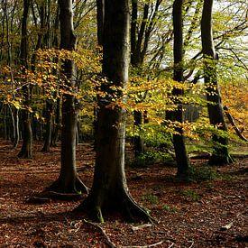 herfstbos van Marika Rentier