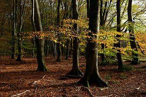 forêt d'automne sur Marika Rentier