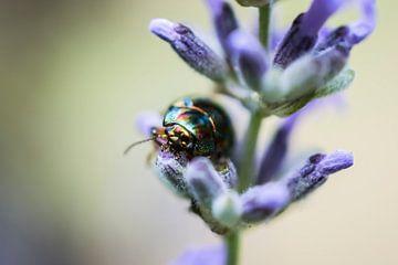 Lavendel & kever van Zsa Zsa Faes