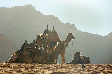 Chameaux dans le désert du Jourdain sur Bastiaan Buurman