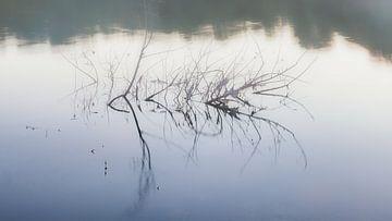 Busch in der Loire von Evert Jan Luchies